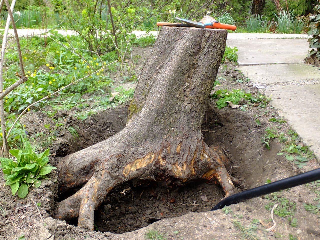 Как удалить пни после вырубки деревьев?